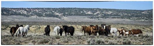 Paisagem dos cavalos selvagens de bacia de lavagem da areia Fotos de Stock Royalty Free