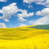 Paisagem dos montes das ondas de campos coloridos e do céu azul bonito Imagem de Stock