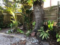Paisagem dos trópicos Imagem de Stock Royalty Free