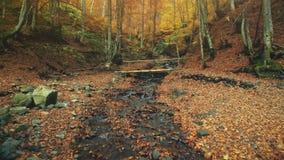 Paisagem dourada da floresta do córrego natural selvagem agradável filme