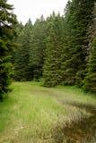 Paisagem dramática da floresta Fuga de caminhada na floresta do parque nacional de Durmitor foto de stock royalty free