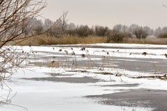 Paisagem e árvores do inverno Fotografia de Stock