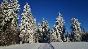 Paisagem e árvores do inverno Imagem de Stock Royalty Free