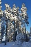 Paisagem e árvores do inverno Fotos de Stock Royalty Free