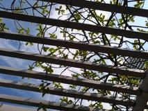 A paisagem e o marco da cidade com céu azul nublam-se o primeiro plano da árvore imagem de stock royalty free