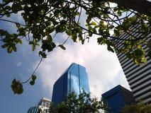 A paisagem e o marco da cidade com céu azul nublam-se o primeiro plano da árvore imagens de stock