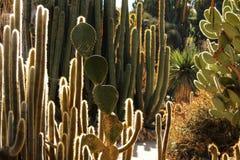 Paisagem e plantas do deserto imagens de stock