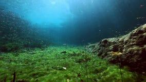 Paisagem e vegetação subaquáticas no cenote do lago video estoque
