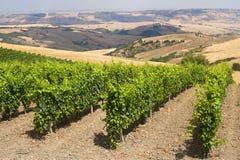 Paisagem em Basilicata (Italy): vinhedo Fotos de Stock Royalty Free