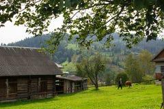 Paisagem em Carpathians no auturmn Fotos de Stock