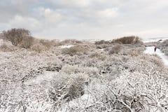 Paisagem em Holandas Duin no inverno fotos de stock royalty free
