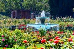 Paisagem em Rose Garden municipal, San Jose, Califórnia imagens de stock