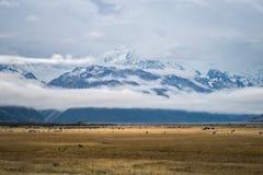 Paisagem em torno do Mt Parque nacional do cozinheiro/Aoraki, Nova Zelândia Imagens de Stock Royalty Free