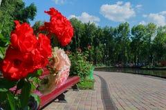 Paisagem em um parque da cidade Imagem de Stock Royalty Free