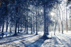 Paisagem em uma floresta Fotos de Stock Royalty Free