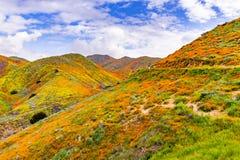 Paisagem em Walker Canyon durante o superbloom, papoilas de Califórnia que cobrem os vales da montanha e os cumes, lago Elsinore, foto de stock royalty free