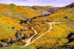 Paisagem em Walker Canyon durante o superbloom, papoilas de Califórnia que cobrem os vales da montanha e os cumes, lago Elsinore, imagens de stock royalty free