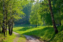 Paisagem ensolarada com floresta e passeio. Fotos de Stock