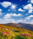 Arbustos de florescência nas montanhas Foto de Stock Royalty Free