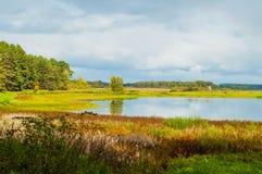 Paisagem ensolarada do outono de árvores do rio de Soroti e de floresta do outono em Pushkinskiye cruento, Rússia - o filtro maci Imagem de Stock