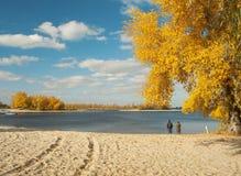 Paisagem ensolarada do outono na praia do rio fotos de stock royalty free