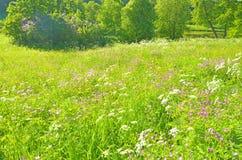 Paisagem ensolarada na floresta Imagem de Stock Royalty Free