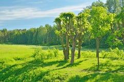 Paisagem ensolarada na floresta Imagens de Stock Royalty Free