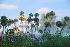 Paisagem - ervas no orvalho Fotos de Stock Royalty Free