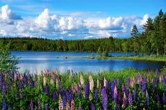 Paisagem escandinava do verão Fotografia de Stock Royalty Free