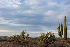 A paisagem escassa do deserto imagens de stock