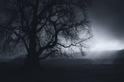Paisagem escura com a árvore gigante na noite Imagem de Stock Royalty Free