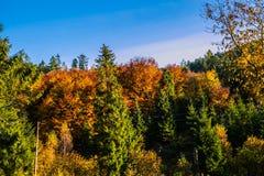 Paisagem eslovaca do outono da natureza com floresta colorida Fotos de Stock
