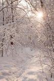 Paisagem estrada nevado congelada Sol do inverno Madeira do inverno Fotos de Stock Royalty Free