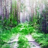 Paisagem exterior da floresta fotos de stock