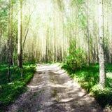Paisagem exterior da floresta foto de stock royalty free