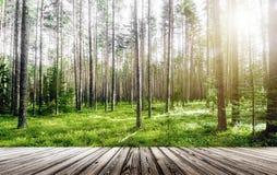 Paisagem exterior da floresta fotografia de stock royalty free