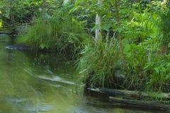 Paisagem fluida do verão da natureza do córrego da angra do movimento verde da água da floresta Imagem de Stock