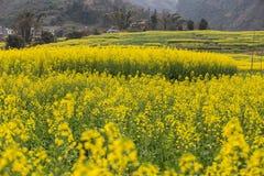 Paisagem fresca da mola de campos coloridos Imagens de Stock