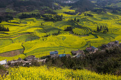 Paisagem fresca da mola de campos coloridos Imagens de Stock Royalty Free