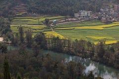 Paisagem fresca da mola de campos coloridos Imagem de Stock Royalty Free