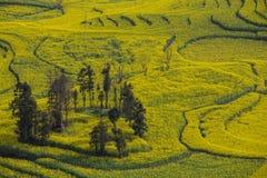 Paisagem fresca da mola de campos coloridos Foto de Stock Royalty Free