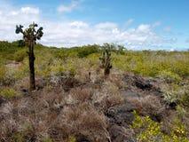 Paisagem Galápagos fotos de stock royalty free