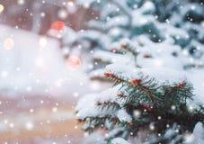 Paisagem gelado do inverno nos ramos nevado do pinho da floresta cobertos com a neve no tempo frio do inverno Imagem de Stock Royalty Free