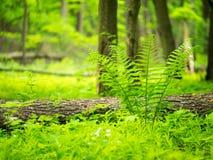 Paisagem Grama verde e árvores Fotografia de Stock Royalty Free