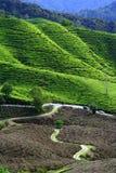 Paisagem Greenish da montanha Fotografia de Stock Royalty Free