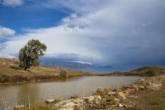 Paisagem grega com árvore e lagoa Fotografia de Stock