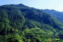 Paisagem Himalayan da floresta, passeio em a montanha a Annapurna Foto de Stock Royalty Free