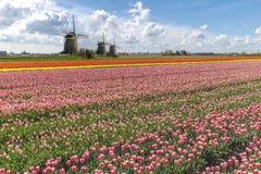 Paisagem holandesa do moinho de vento dos Tulips Imagens de Stock