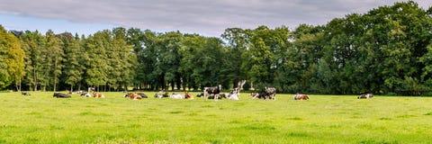 Paisagem holandesa típica foto de stock