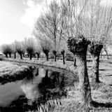 Paisagem holandesa típica com uma fileira das árvores ao longo do rio fotos de stock